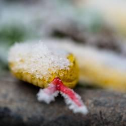 Schneeschlange