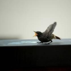 Vogel ruft nach Mami