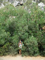 unterm oleander