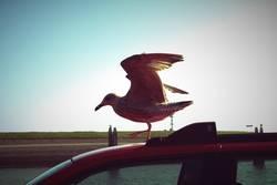 nur fliegen ist schöner
