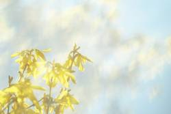 Fototapete Frühling [ Nummer Dreißig]