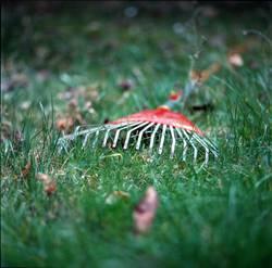 Roter Gartenrechen