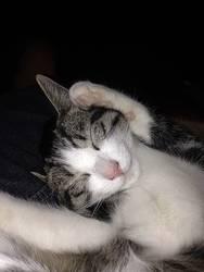 Kalli schläft