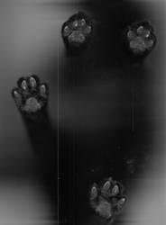 scan II