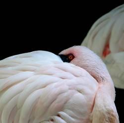 flamingo vor flamingo