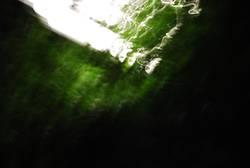 Laternenwaldblitzlichtgewitter