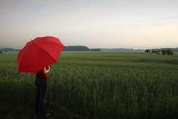 Gibt's im Juni Donnerwetter, wird auch das Getreide fetter.