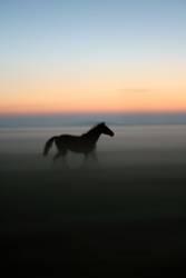 Der David Hamilton der Pferdefotographie :)