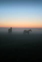 Zärtliche (Pferde-) Cousinen