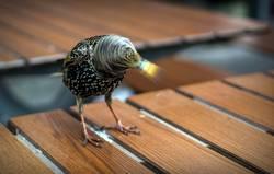 Vogel mit Drehwurm