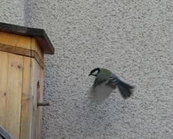Essen auf Flügeln