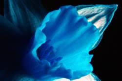 Blüte in Falschfarben