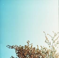Für dich solls bunte Bilder (Blüten) regnen