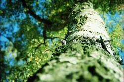 [wpt HH 10.12] Früher Frühling - später Herbst