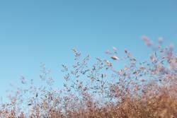 Augenblick im Wind