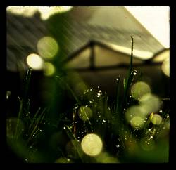 grünes. licht.