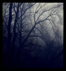 blue. haze.