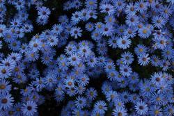 Herbstblau