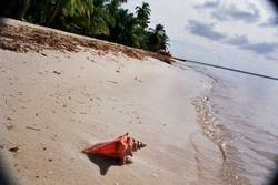 Muschel vom palmilla strand