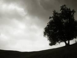 Round a Baum