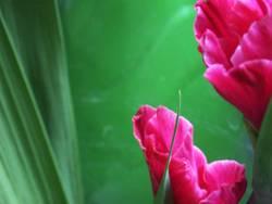 Blumenzeit II