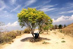 Siesta unterm Baum
