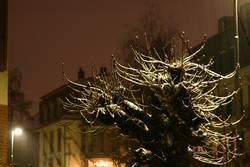 Schneeielet