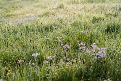 Meadow in the morning