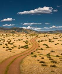 Road to a wild floor