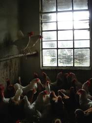 Aufgeschreckte Hühnerbande