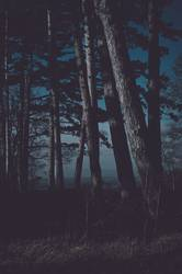 Forest at night matte look