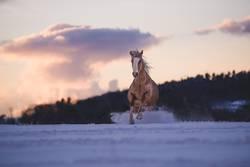 Running trough winter