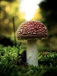 Mein Freund der Pilz