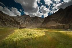 Wheat filed landscape located in Marhka Valley, Leh India