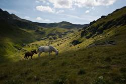 Horses in green mountain valley