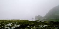 Nebelbucht