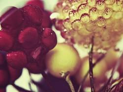 Beerenmischung
