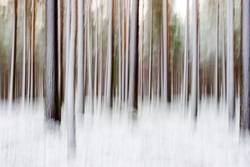 Abstract winter forest