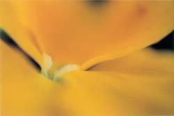 Butterblüte_3