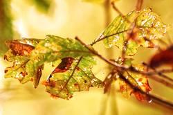 Glühender Herbst