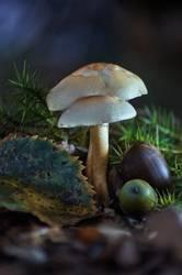 Pilz im dunklen Wald