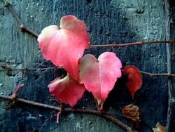 Leaf_x4