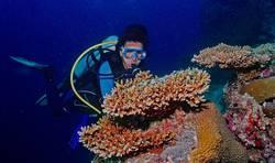 Taucher am Korallenblock