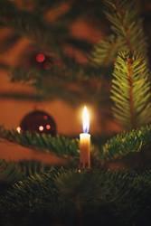 Echte Kerze am Weihnachtsbaum