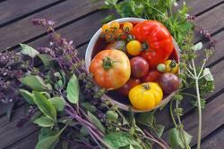 Tomatenallerlei mit frischen Kräutern