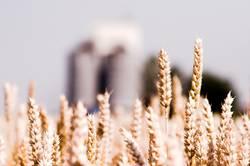 Land und Getreide