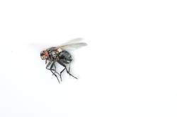 The - Fly