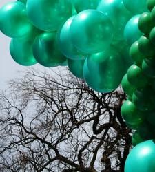 Grüne Ballons vs. Astgeflecht