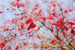 Herbstflitter