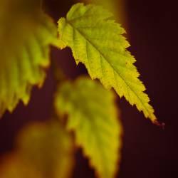 Zackig durch den Herbst